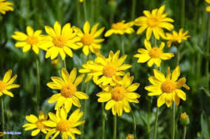 arnica water and bottle Order arnica 30c in a 5ml in the liquid dilution in ethanol in a bottle with a dropper arrangement get a 500ml bottle of spring water from the nearest supermarket pour out about 3cm of water from the bottle to leave some airspace.